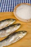 Salt preserved sardines Royalty Free Stock Image