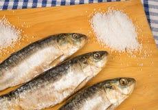 Salt preserved sardines Stock Photography