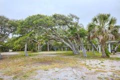 Salt Pruned Oak Trees. At Anastasia State Park in Florida royalty free stock image