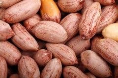 Salt-roasted peanuts Stock Images