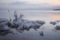 Salt Rocks and Tree at The Dead Sea Stock Photos