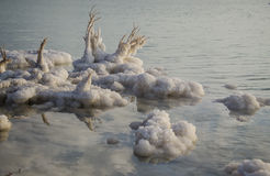 Salt Rocks and Trees at The Dead Sea Stock Photography