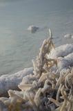 Salt Rocks and Trees at The Dead Sea Stock Photos