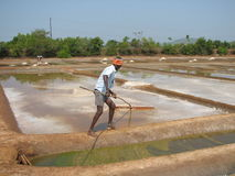Salt salt extraction food industry India Stock Images