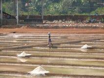 Salt salt extraction food industry India Stock Photo