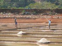 Salt salt extraction food industry India Stock Photography