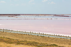 Salt sea water evaporation ponds with pink plankton colour Royalty Free Stock Photos
