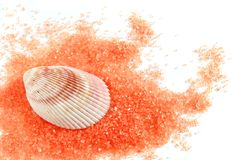 Salt and shell Royalty Free Stock Photos