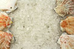 Salt and shells Royalty Free Stock Photography
