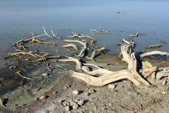 Salt sjö Fotografering för Bildbyråer