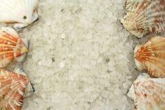 salt skal Royaltyfri Fotografi