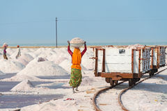 Salt som samlar i den salt lantgården, Indien Royaltyfri Bild