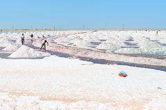 Salt som samlar i den salta lantgården, Indien Arkivbilder