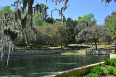 Salt Springs Ocala National Forest, Florida Stock Photography