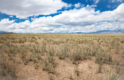 Salt steppe Royalty Free Stock Image