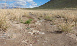Salt steppe Royalty Free Stock Photography
