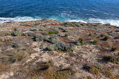 Salt tolerant plants and grass growing on coast, Flinders Chase Stock Image