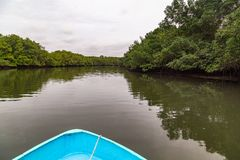 Salt water channels and mangrove trees. With their green leaves as the afternoon approaches royalty free stock images