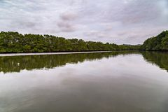 Salt water channels and mangrove trees. With their green leaves as the afternoon approaches royalty free stock photos