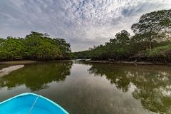 Salt water channels and mangrove trees. With their green leaves as the afternoon approaches stock photos