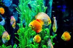 Free Salt Water Fish In The Ocean Royalty Free Stock Image - 40081546