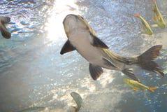Salt Water Fish in Tank Stock Photos