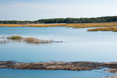 Salt water marsh in South Carolina with blue sky reflections. A salt water marsh in South Carolina with blue sky reflections in the water. There is a slight Royalty Free Stock Image