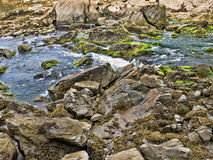 Salt water stream. A salt water stream at low tide with large rocks and boulders covered with green algae and seaweed on the coast of Maine Royalty Free Stock Photo