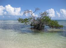 Salt water tree Stock Photos