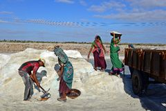 Salt Worker in India Royalty Free Stock Images