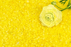 Salt yellow with flower Stock Photo