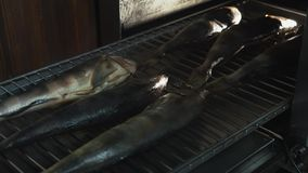 Salta fisken som ligger på galler, eller spisgallret som förläggas i smokehouse eller, röka ugnen för att röka arkivfilmer