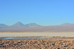 Salta framlänges och Lagunaen Tebinquiche i den Atacama öknen, Chile Royaltyfri Fotografi