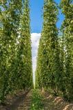Salta la piantagione in Baviera, Germania Fotografia Stock