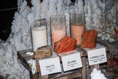 Salta mineraler med olika typer av halitekristalliseringscarnalite silvina Royaltyfri Bild