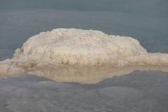 Salta noduler plocka svamp på kusterna av det döda havet - Israel Arkivfoton