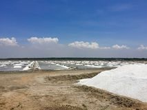 Salta plockningfält nära Pondicherry Arkivbild
