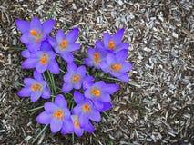 Salta a primeira flor Imagens de Stock