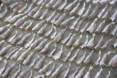 saltad dryingfisk Royaltyfria Foton