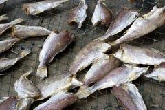 saltad dryingfisk Royaltyfri Bild