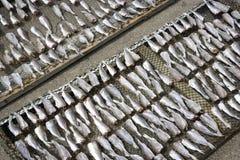 saltad dryingfisk Royaltyfria Bilder