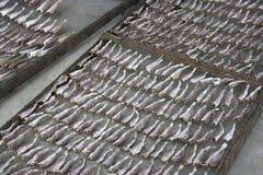 saltad dryingfisk Royaltyfri Foto