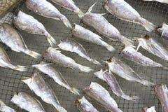 saltad dryingfisk Arkivfoto