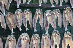 saltad fisk Arkivfoto