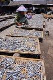 saltad fisk Fotografering för Bildbyråer