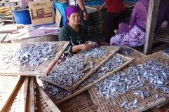 saltad fisk Arkivfoton