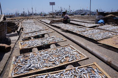 saltad fisk Royaltyfria Bilder