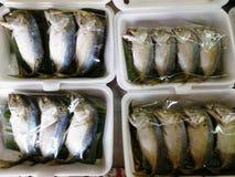 saltad mackerel Royaltyfri Foto