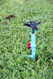 Saltador en jardín. Imagen de archivo libre de regalías