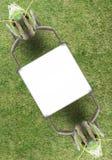 Saltamontes Imagen de archivo libre de regalías
